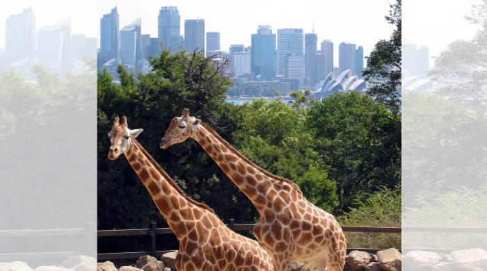 Zoológico en Sydney