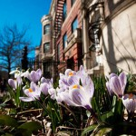 Alojamiento en campus en Boston University
