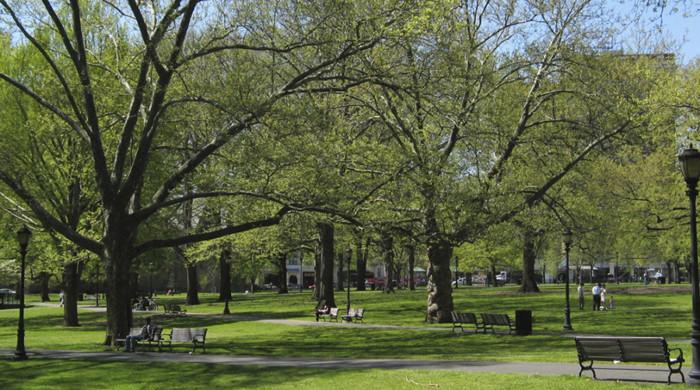 jardines campus Yale